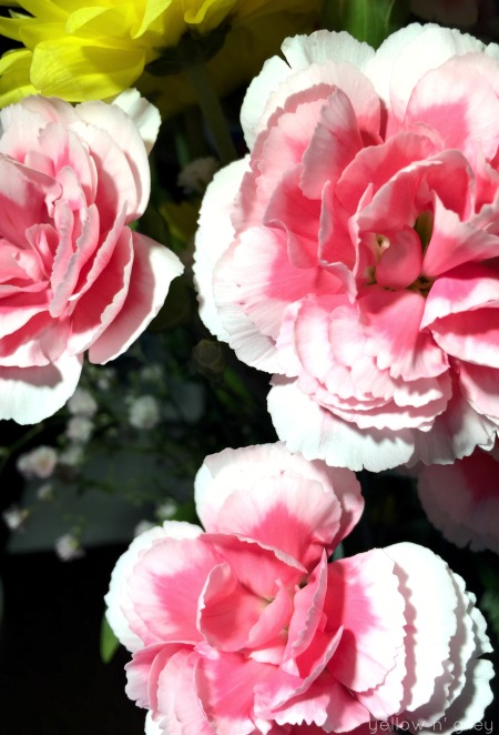 surprise_flowers
